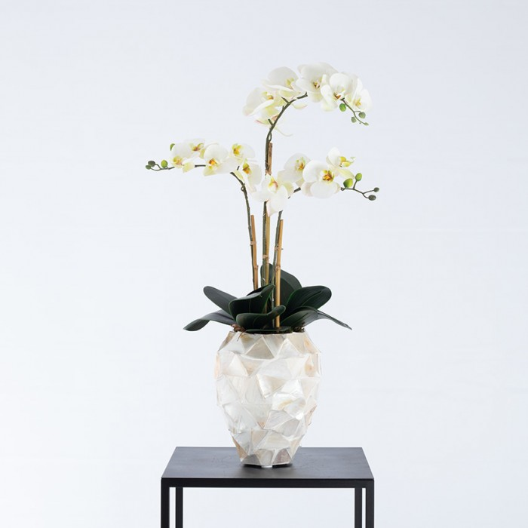 Beau schelpenpot wit gevuld met orchideeën - Pot & Vaas